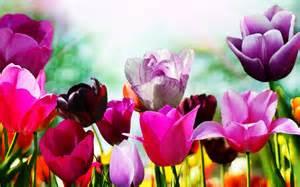 bloembollenactie