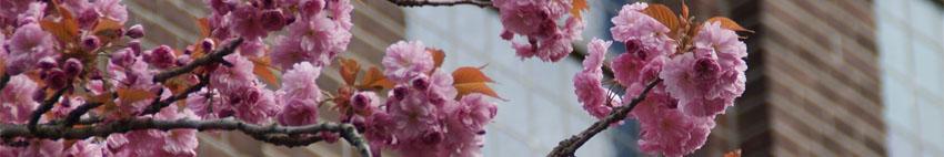 bloemen-kerk